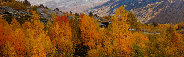 image of fall trees and mountain on Coppertree Counseling website